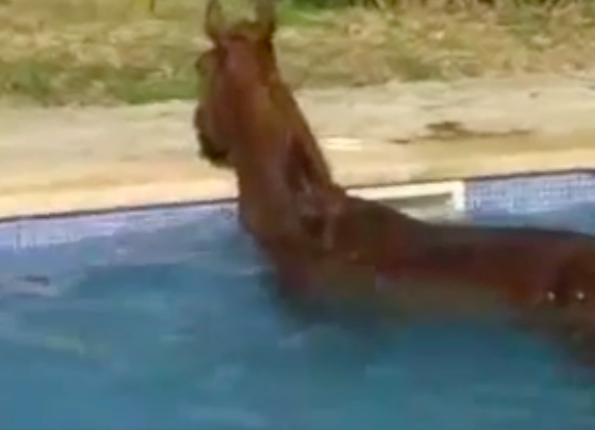 Ten koń codziennie ma dziwny rytuał. Opiekunowi w końcu udaje się go nagrać