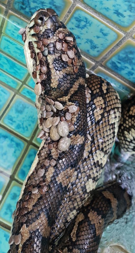 Do sieci trafiło szokujące zdjęcie węża. Jego widok dosłownie przeraża