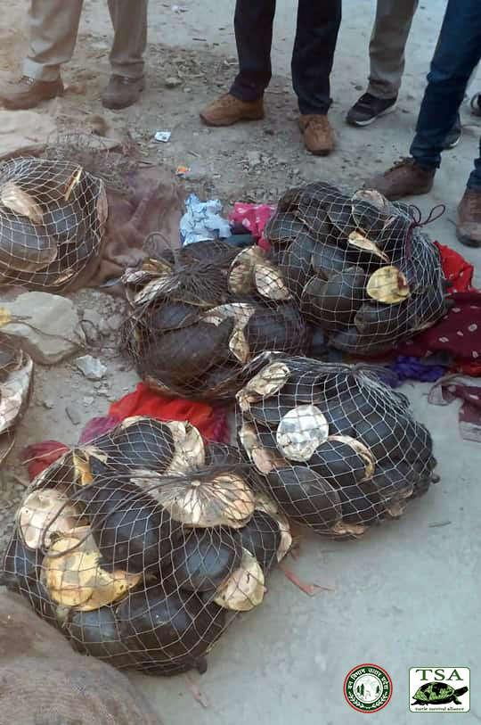 Znaleźli dziwnie spakowane worki. W środku znajdowały się żółwie, które umierały w ich rękach
