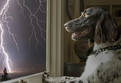 Czego najczęściej obawiają się nasze pupile – 10 popularnych psich fobii