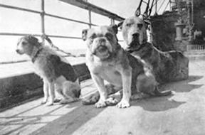 14 niesamowitych faktów na temat psów, których wcześniej zapewne nie znałeś