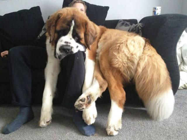 10 zabawnych rozterek, z którymi codziennie zmagają się rodzice dużych psów