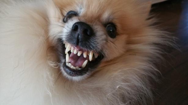 12 rzeczy, które usilnie stara się przekazać ci twój pies. Uważnie go obserwuj!