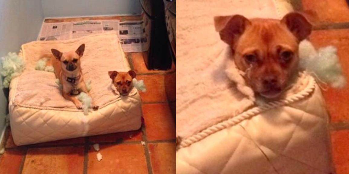 19 zdjęć, które udowadniają, że psy są dziwacznymi stworzeniami