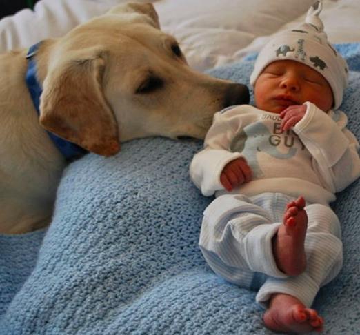 15 psów, którym wydaje się, że to one są dziećmi. Patrząc na #13 popłakałam się ze śmiechu