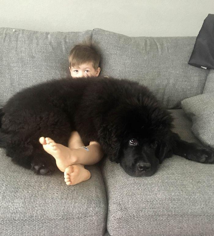 16 zdjęć, które udowadniają, że nowofundlandy nieco różnią się od innych psów