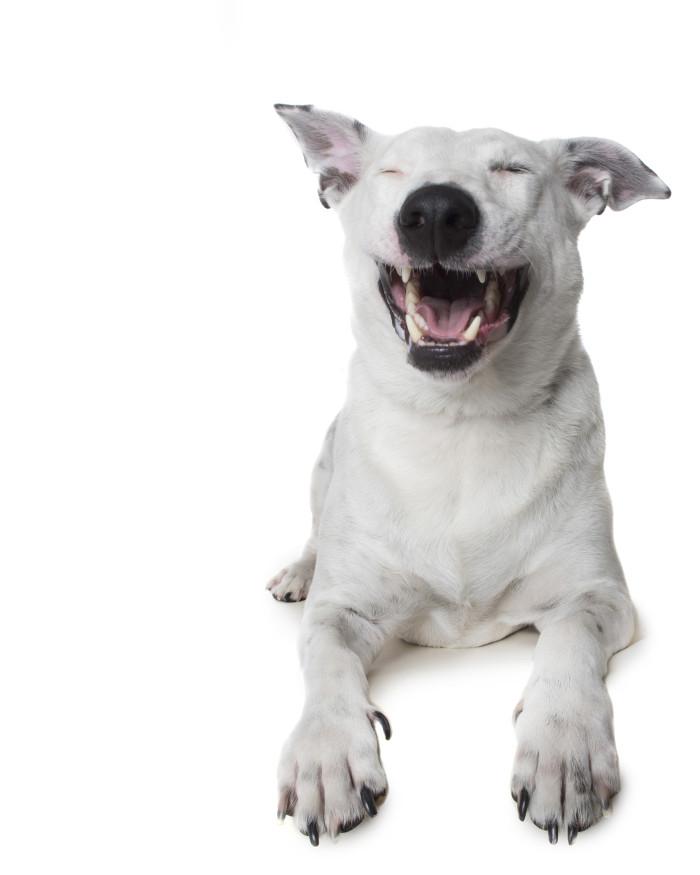 Fotografka chwyciła na zdjęciach czysty relaks psów. Ta sesja zdobyła szerokie uznanie