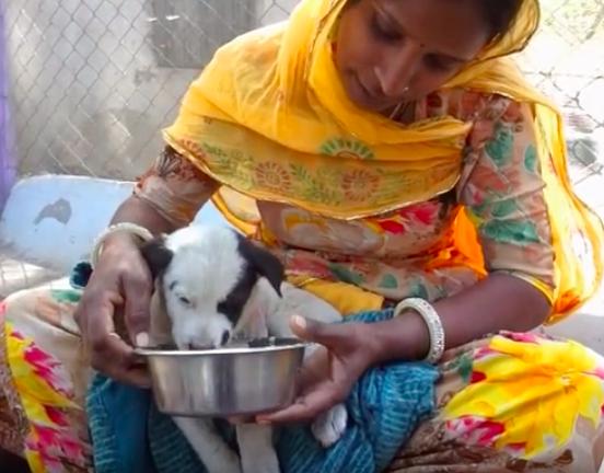 Psia mama wyła z rozpaczy i błagała, aby ktoś uratował jej ranne dziecko