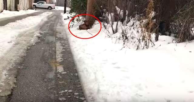 Usłyszała przeraźliwe skomlenie bezdomnego psa. Jego jęki przyprawiają o dreszcze