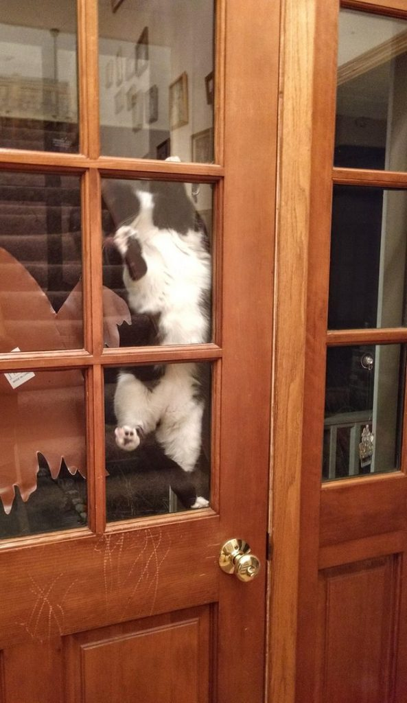 17 kotów, które mają w nosie zasady. Zupełnie niczym się nie przejmują!