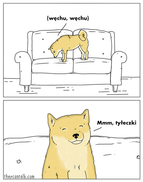 Typowe życie psów i kotów ukazane w 30 zabawnych ilustracjach