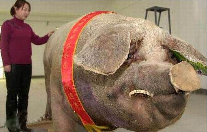 20 ogromnych zwierzaków, które sprawią, że poczujesz się malutki