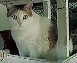 20 ciekawych faktów o kotach, których wcześniej raczej nie znałeś
