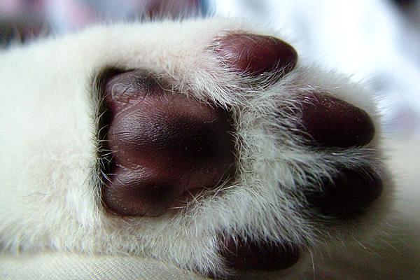 20 zaskakujących faktów o kotach, o których większość ludzi nie ma pojęcia