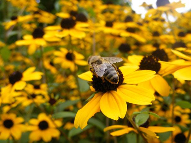 To tak niewiele, ale może uratować pszczoły – 8 rzeczy, dzięki którym każdy z nas pomoże
