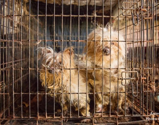 10 niepokojących znaków, które świadczą o tym, że szczeniak pochodzi z pseudo-hodowli