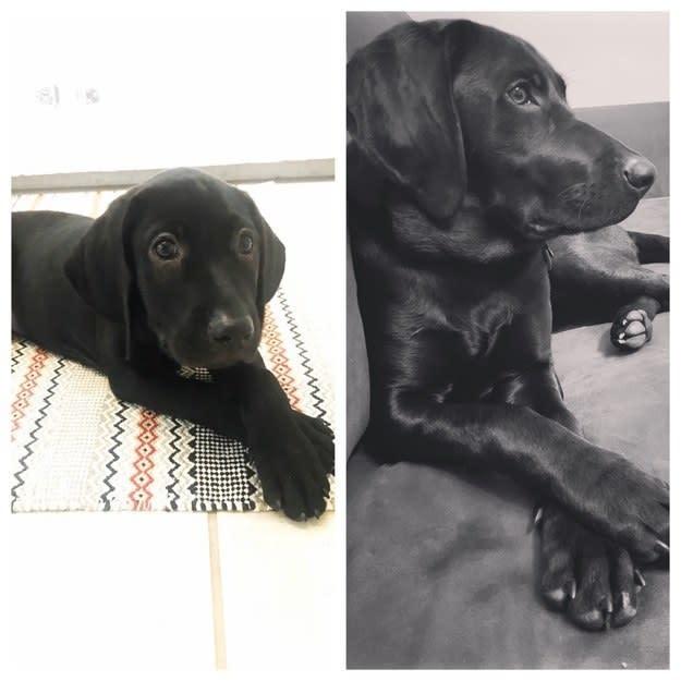 25 zdjęć zwierzaków kiedy były malutkie i kiedy urosły. Ale się zmieniły!