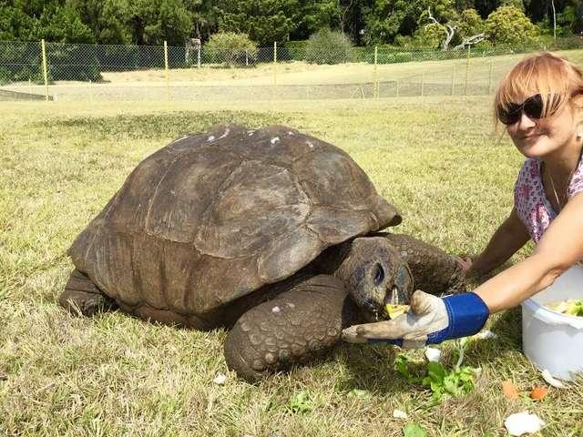Poznaj Jonathana – najstarszego zwierzaka świata. Urodził się przed wynalezieniem żarówki
