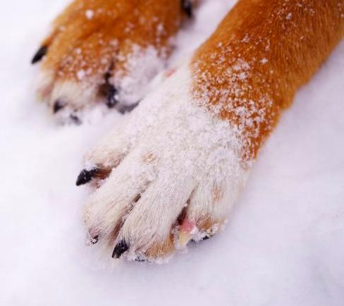 5 niezbędnych porad dotyczących dbania o psie łapki. Ta część ciała wymaga pielęgnacji!