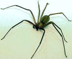 10 najstraszniejszych pająków świata, od których lepiej trzymać się z daleka