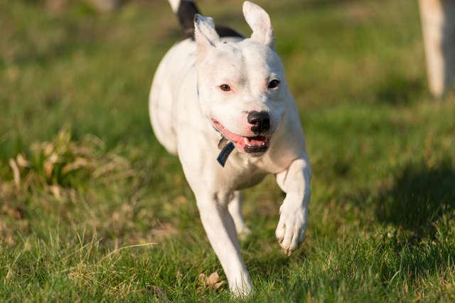 Pamiętacie psa, który gonił za samochodem swojej rodziny? Teraz nie może przestać się uśmiechać