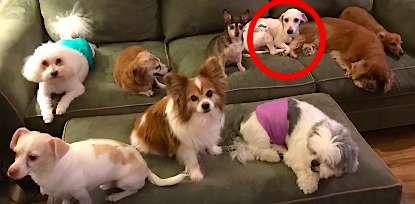 Pies uratowany z pseudo-hodowli zasypia na stojąco, bo zapomniał już jak się leży. Przerażające