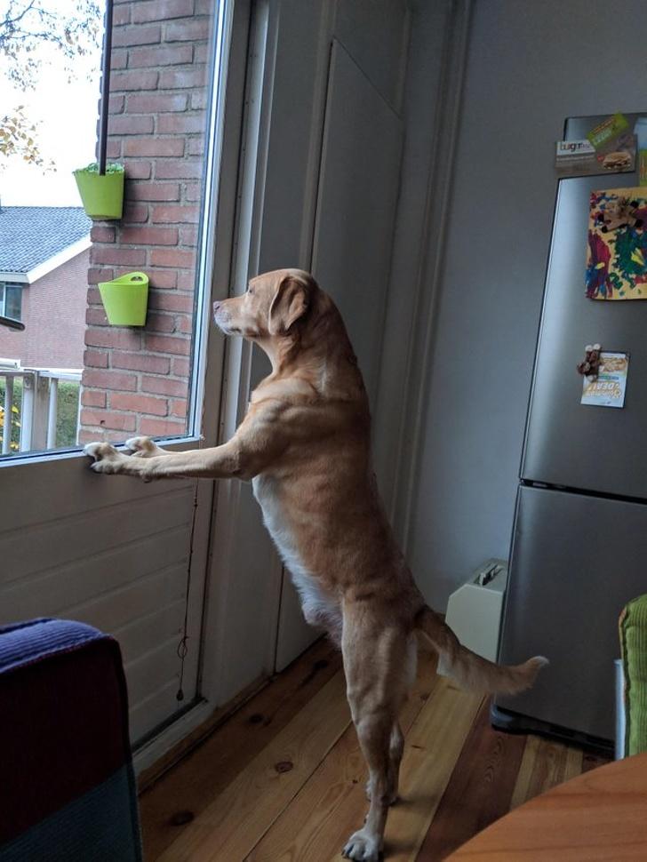 22 urocze zwierzaki, które nie mogą się doczekać, aż ich opiekunowie wrócą do domu