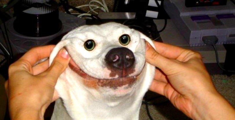"""32 mega dziwnych psów, które sprawią, że krzykniesz: """"CO JEST?!"""""""