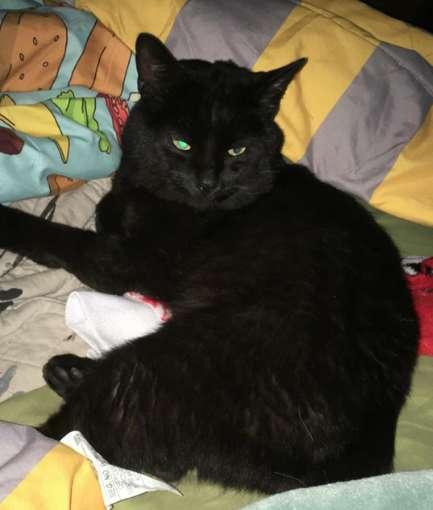 Pochował kota i strasznie to przeżył. Wkrótce okazało się, że doszło do ogromnej pomyłki