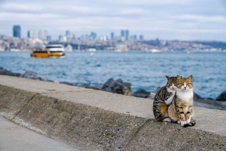 Dwa bezdomne koty się przytulają