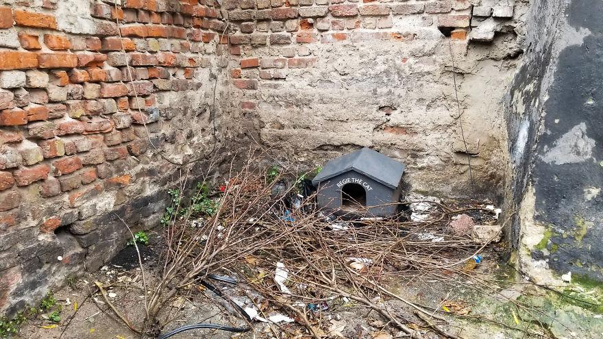 Domek dla kotów w Turcji
