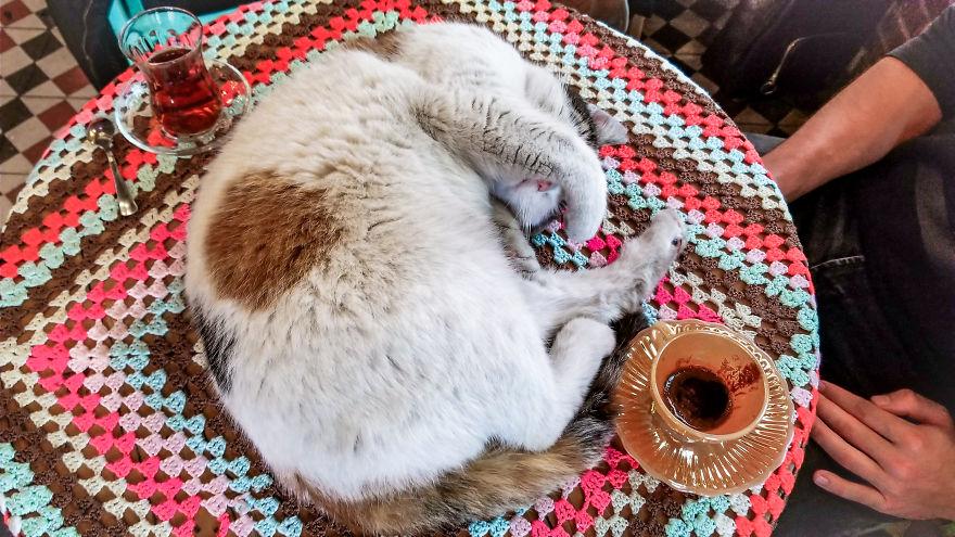 Kot na stole w Turcji