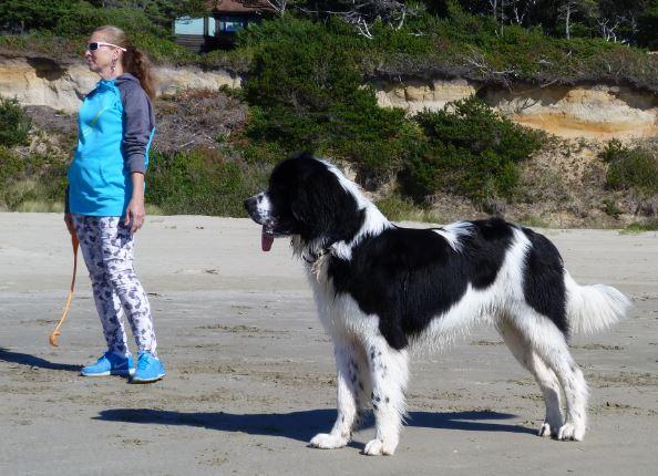 Największe psy świata - landseer