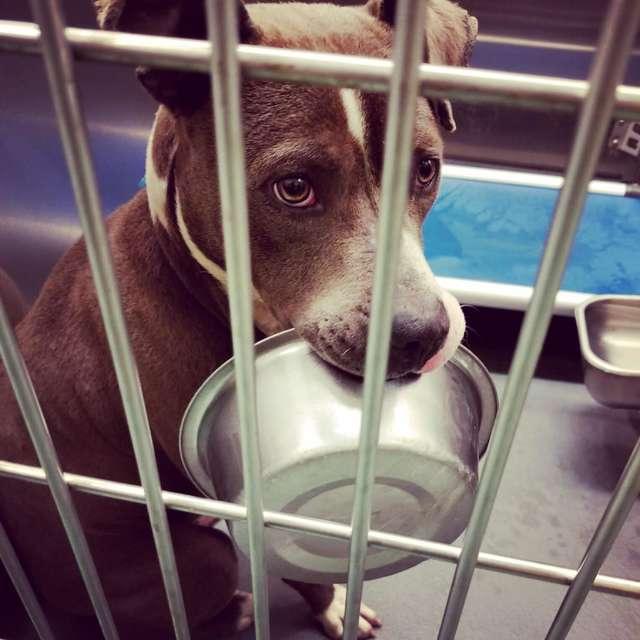 Pies ze schroniska odmawia bycia adoptowanym bez swojej miski na jedzenie