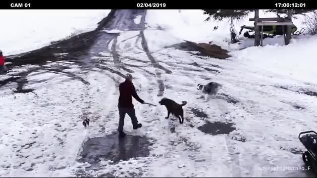 Pies bohater w ostatniej chwili ratuje małego szczeniaka. To mogło skończyć się śmiercią