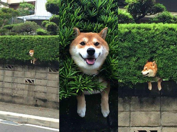 26 zdjęć ukazujących prawdziwe oblicze psów. Idzie się przy nich nieźle uśmiać