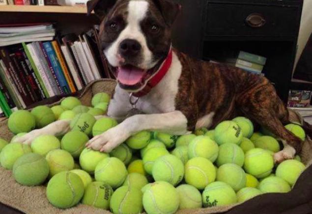 Pies i piłki tenisowe