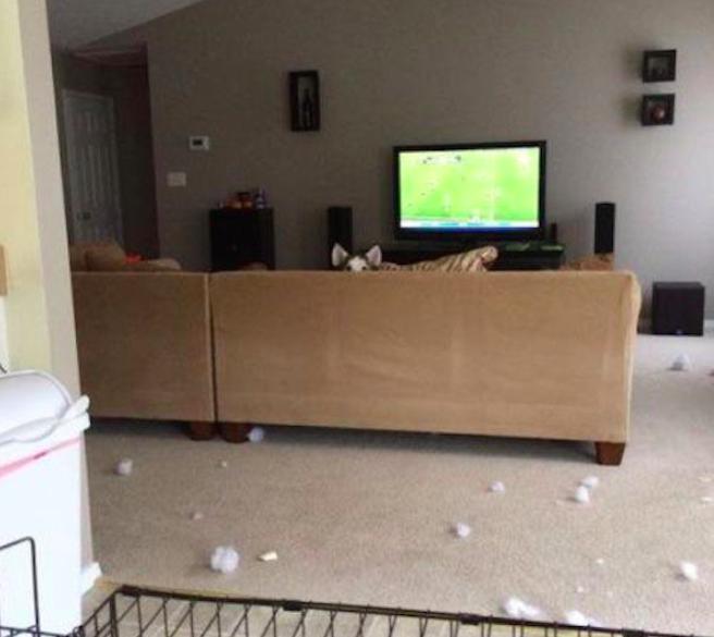 Pies chowa się na kanapie