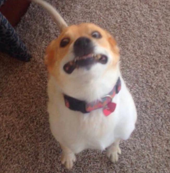 Pies robi śmieszną minę