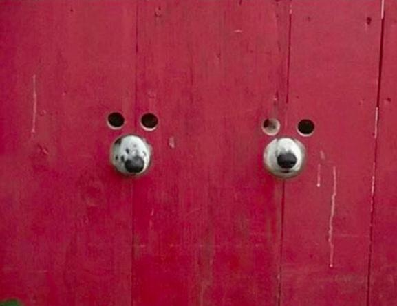 Psy przy bramie