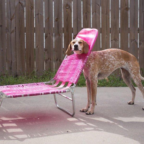 Pies z głową w leżaku