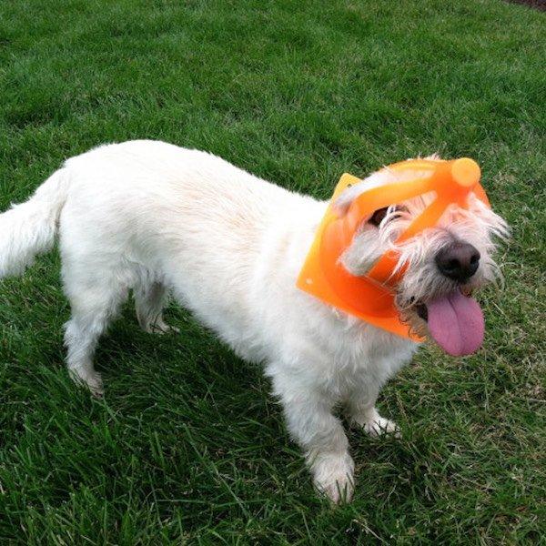 Śmieszny pies