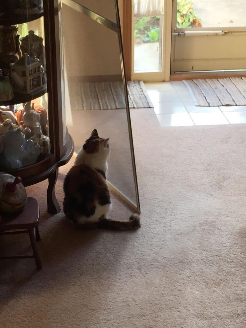 Śmieszne koty, kot i siatka