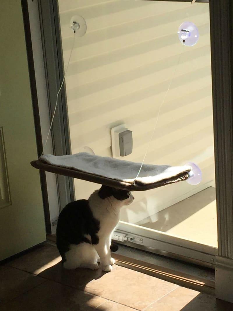 Śmieszne koty, legowisko dla kota
