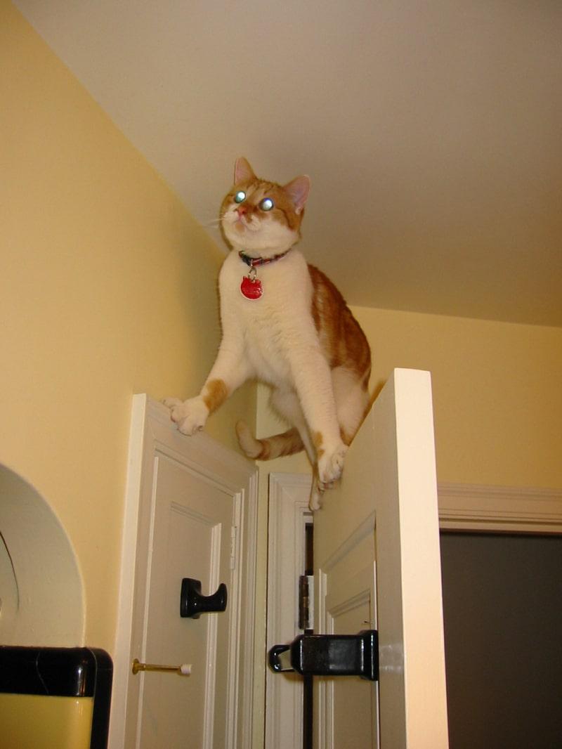 Śmieszne koty, kot na drzwiach