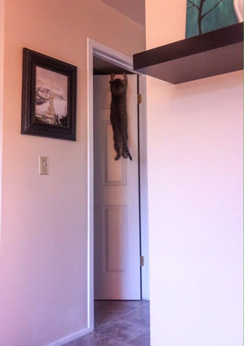 Śmieszne koty, kot wisi na drzwiach