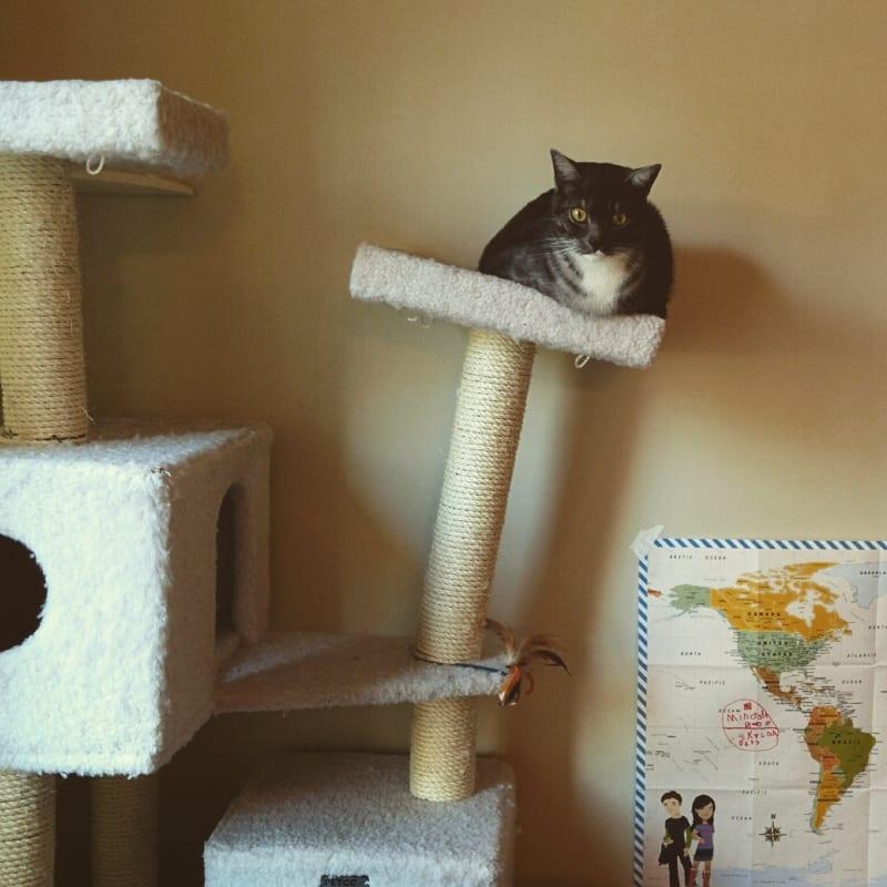 Śmieszne koty, drapak dla kota