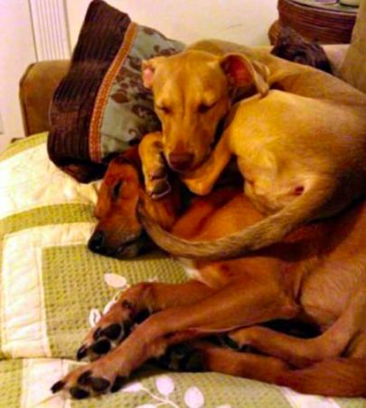 Dwa śpiące psy