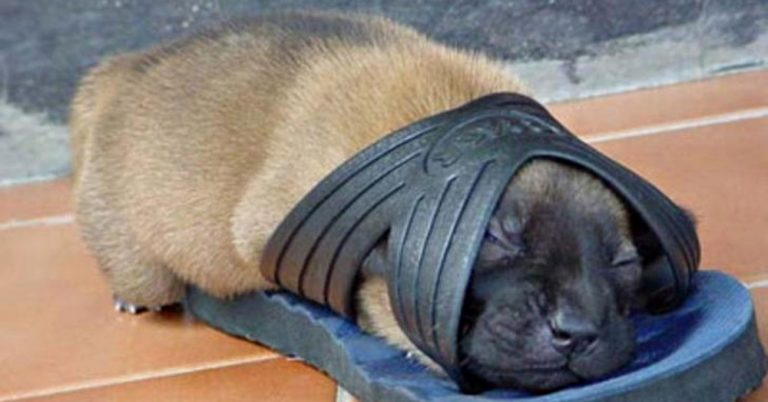 Śpiący szczeniak