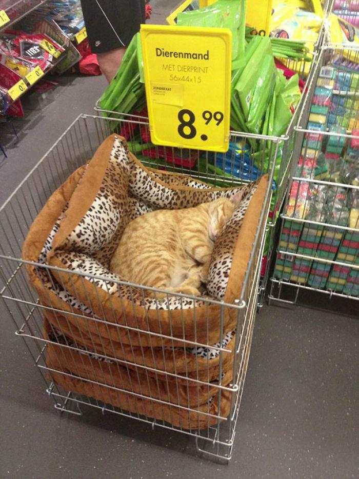 Kot w sklepie